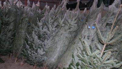 istha weihnachtsbaum 1 11122014