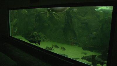 nieste aquarium 11122014