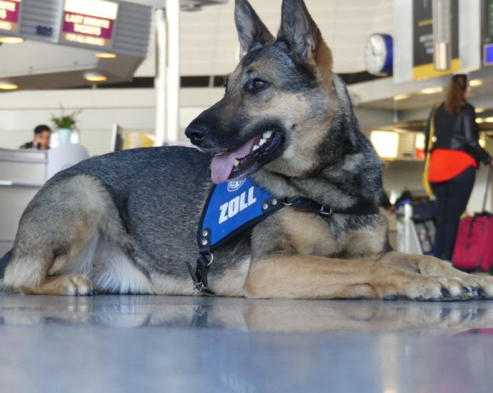 frankfurt polizeihund 28122018