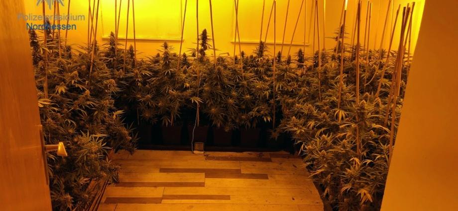 waldeck cannabis 16102019